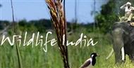 Wildlife India, Wildlife Tours, Wildlife Sanctuaries in India